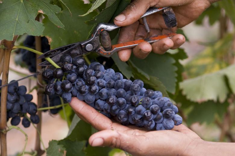u_1410625264_robertson-winery6